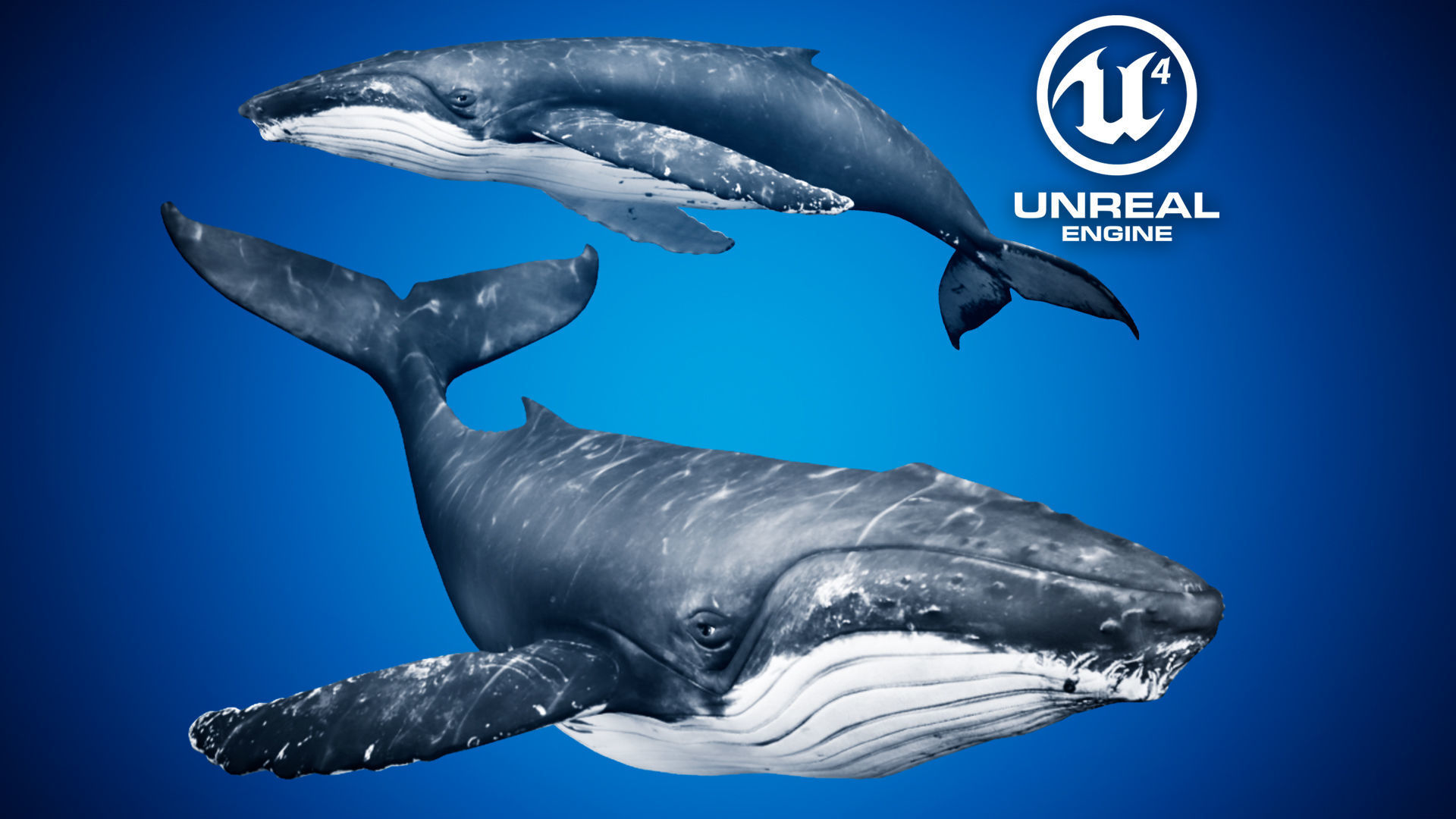 Humpback Whale for Unreal Engine