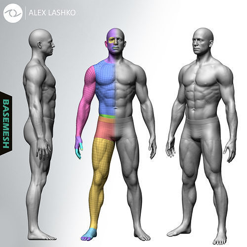 muscular male basemesh 3d model ztl 1
