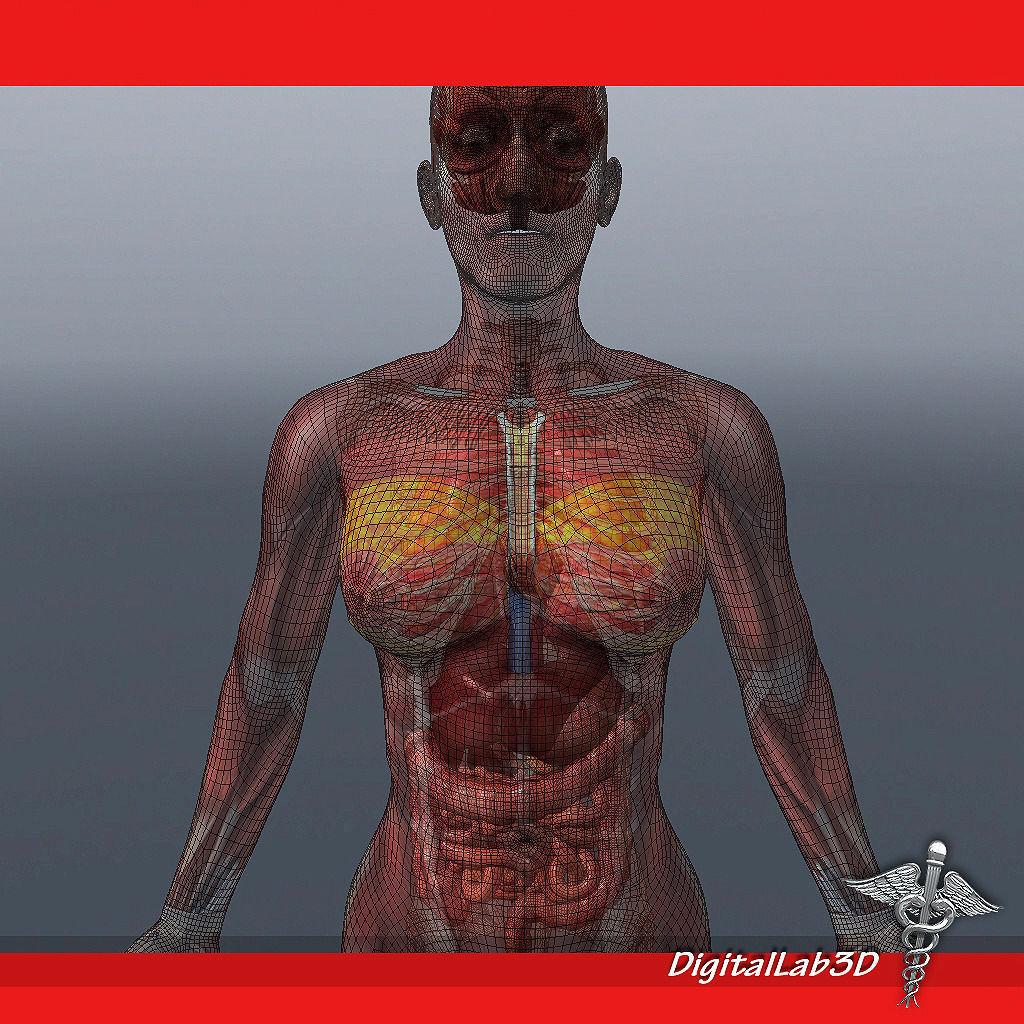 Female Anatomy Live Model