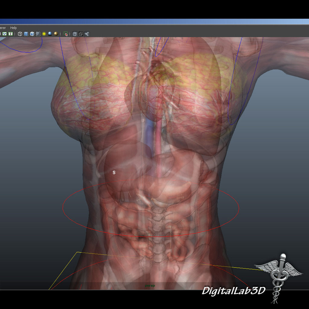 3d Collection Rigged Human Male And Female Anatomy