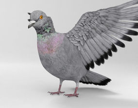 3D model Rock Dove HD