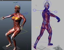 Collection Rigged - Male and Female Muscular System 3D Model