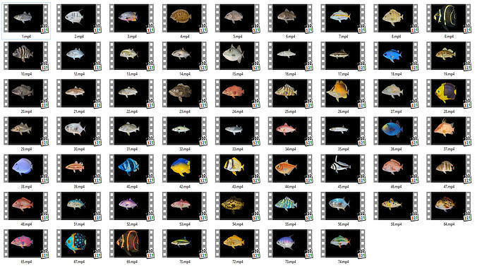 Game Ready Pack 1 - Low poly Rif Fish Collection Animated
