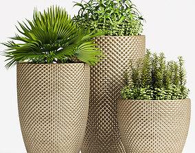 Decorative plant set-62 3D