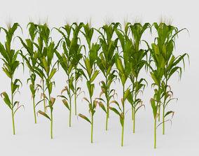 corn Cornfield 3D