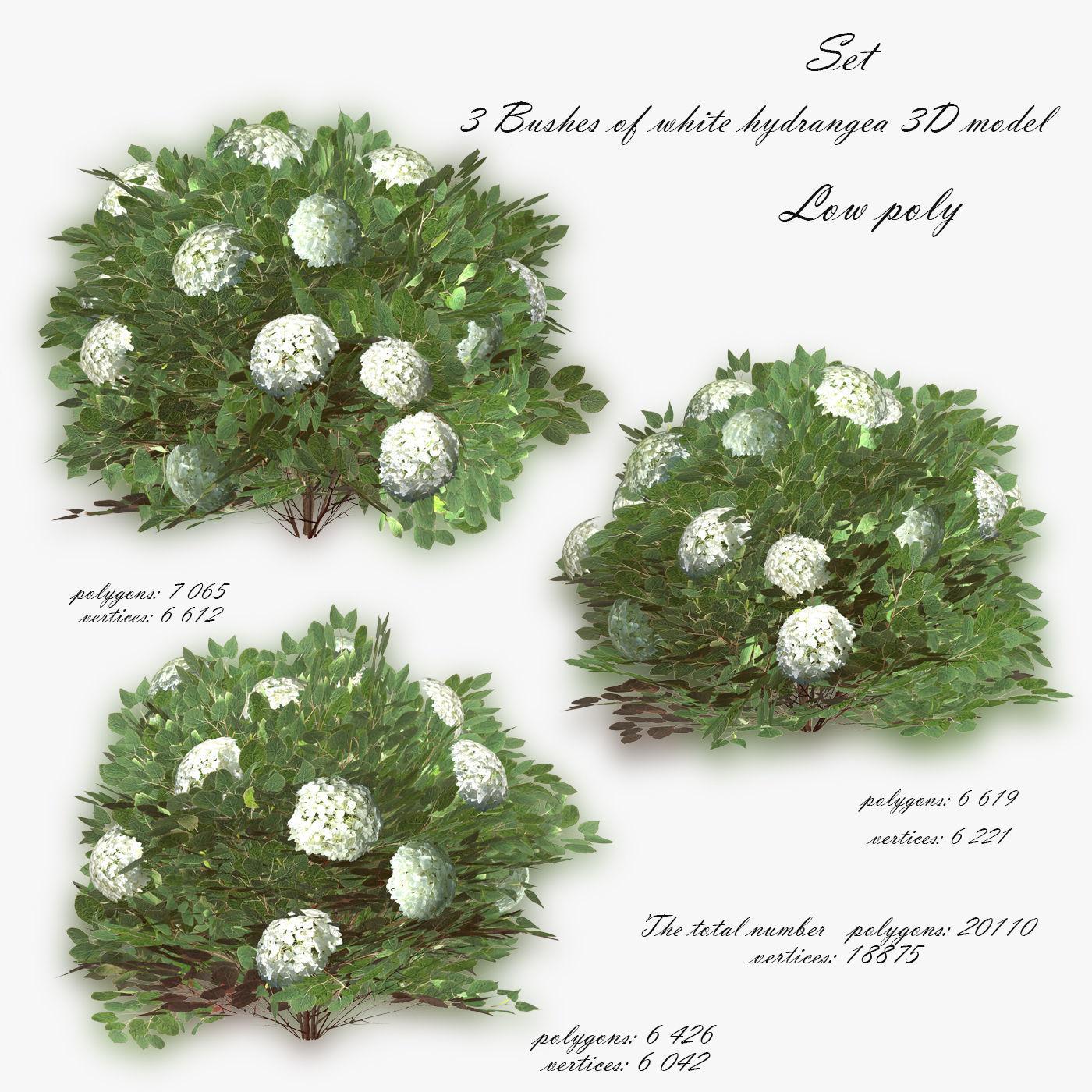 Bush  Hydrangea White low poly 3D model