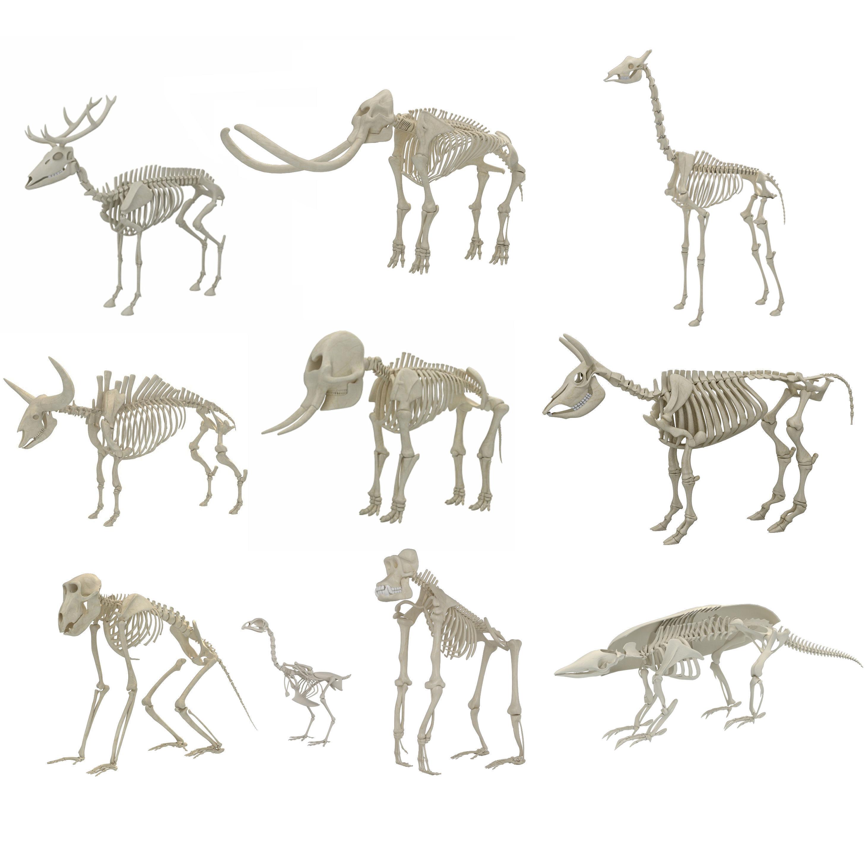 Animal Skeleton 10 in 1