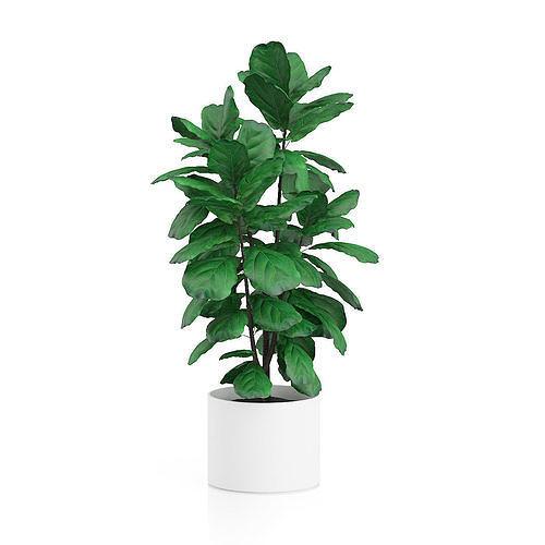 plant tree 14 3d model low-poly max obj mtl 3ds fbx stl dwg 1