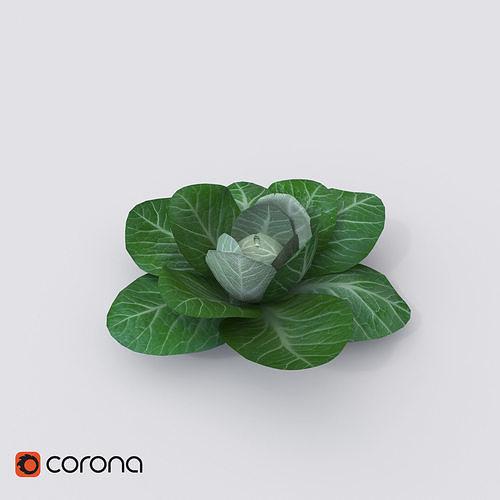 cabbage 3d model max fbx 1