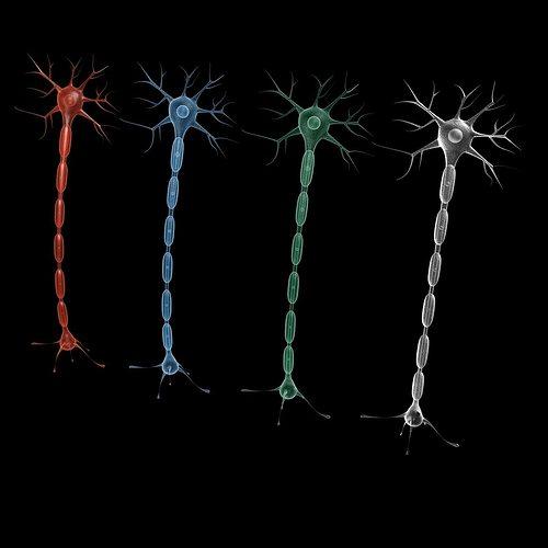 neuron 4 3d model max obj 3ds fbx mtl tga 1