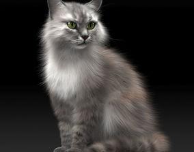 FLUFFY CAT 3D model