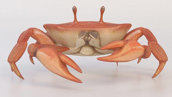 crab crustaceans 3d model max obj mtl 3ds 1