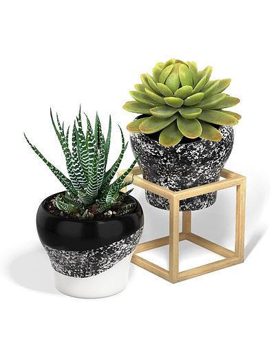 flower pot with a wood cube frame 3d model obj mtl 3ds fbx dae 1