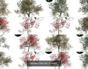 Northern Red Oak 3D