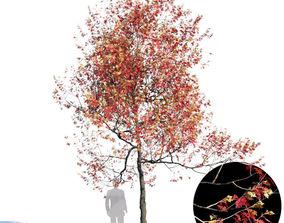 White Oak Var5 3D model