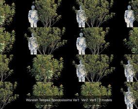 3D model Waratah Telopea Speciosissima Var1 Var2 Var3