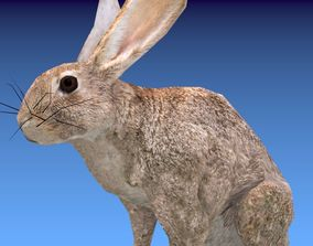 Animated Rabbit 3D asset realtime
