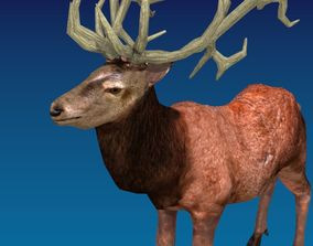 3D model Animated Deer