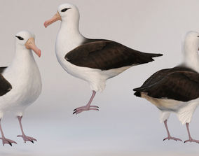 bird Albatross 3D model
