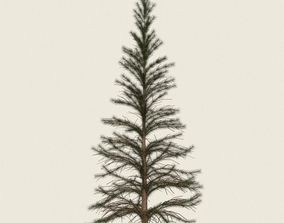 Game Ready Conifer Tree 01 3D asset