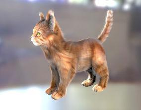 Cat Fur Hair Realistic 3D