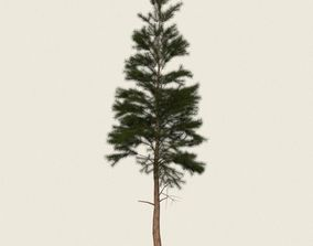 Game Ready Conifer Tree 03 3D model