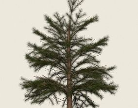 3D asset Game Ready Conifer Tree 05