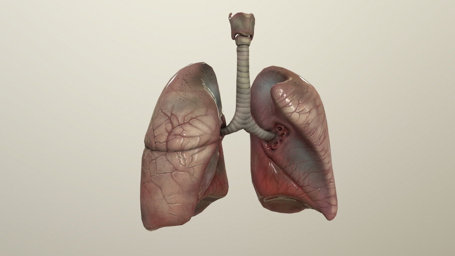 Human Lungs Animated
