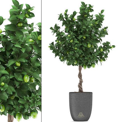 lemon tree with fruit 2 3d model max obj mtl fbx 1