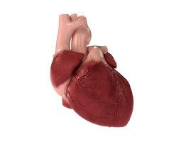 Detailed 3D Human Heart
