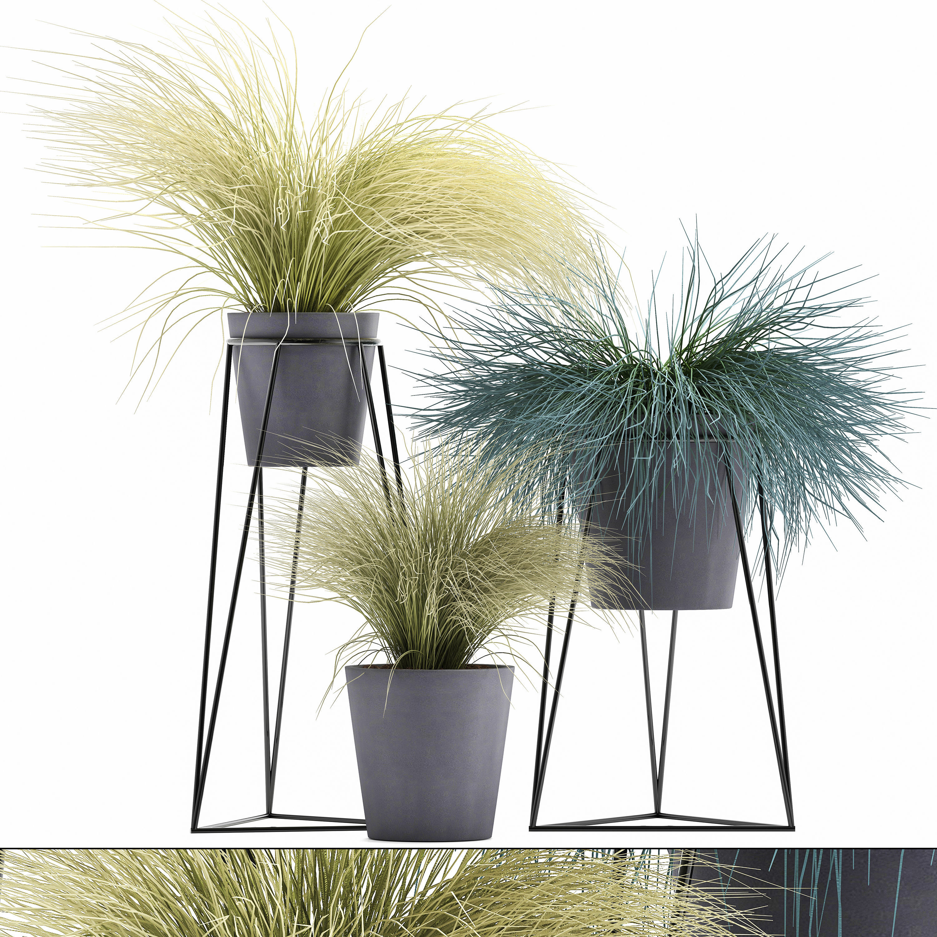 3d Model Collection Of Ornamental Grass Plants Tussock
