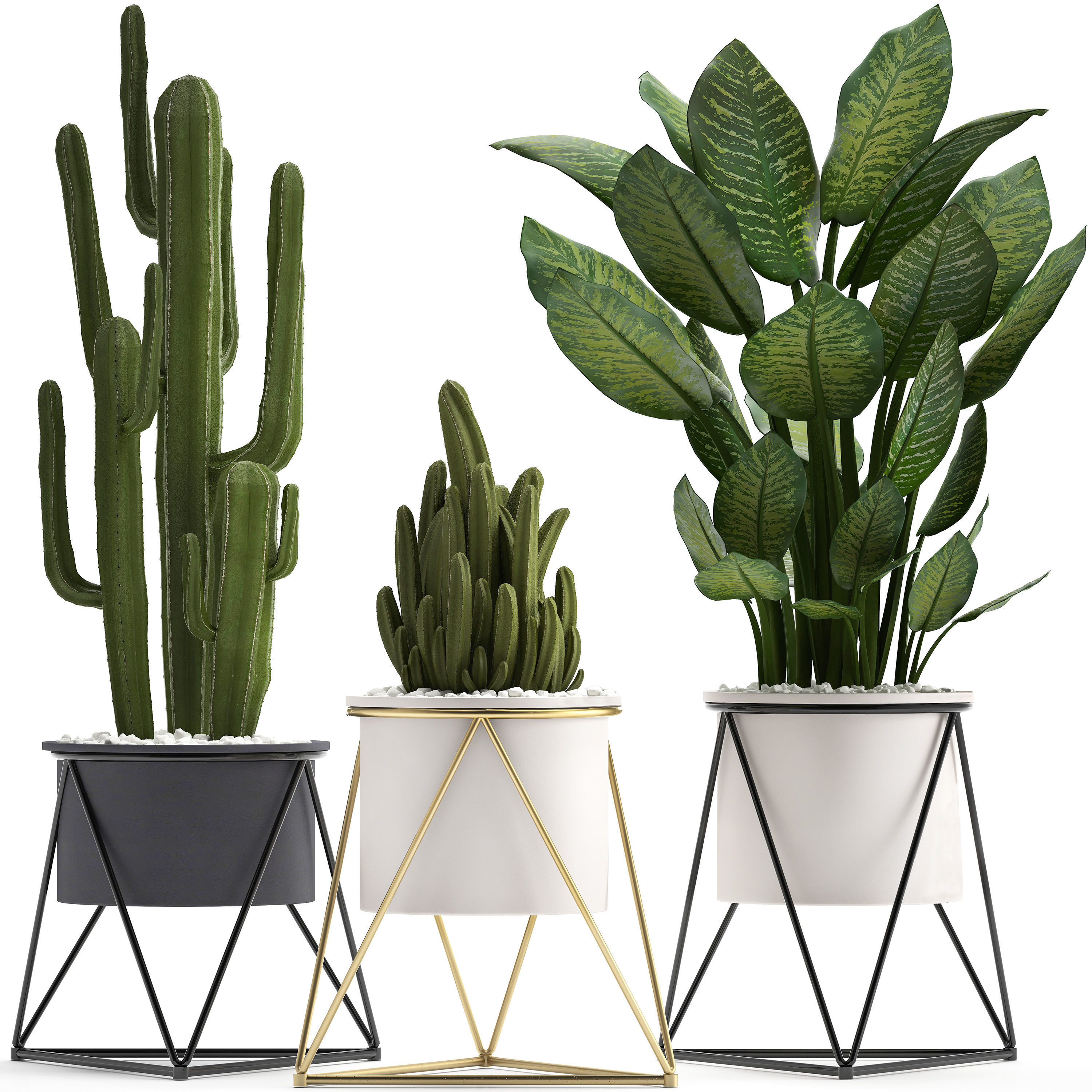 Collection of ornamental plants cactus