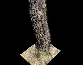 Tree K 3D