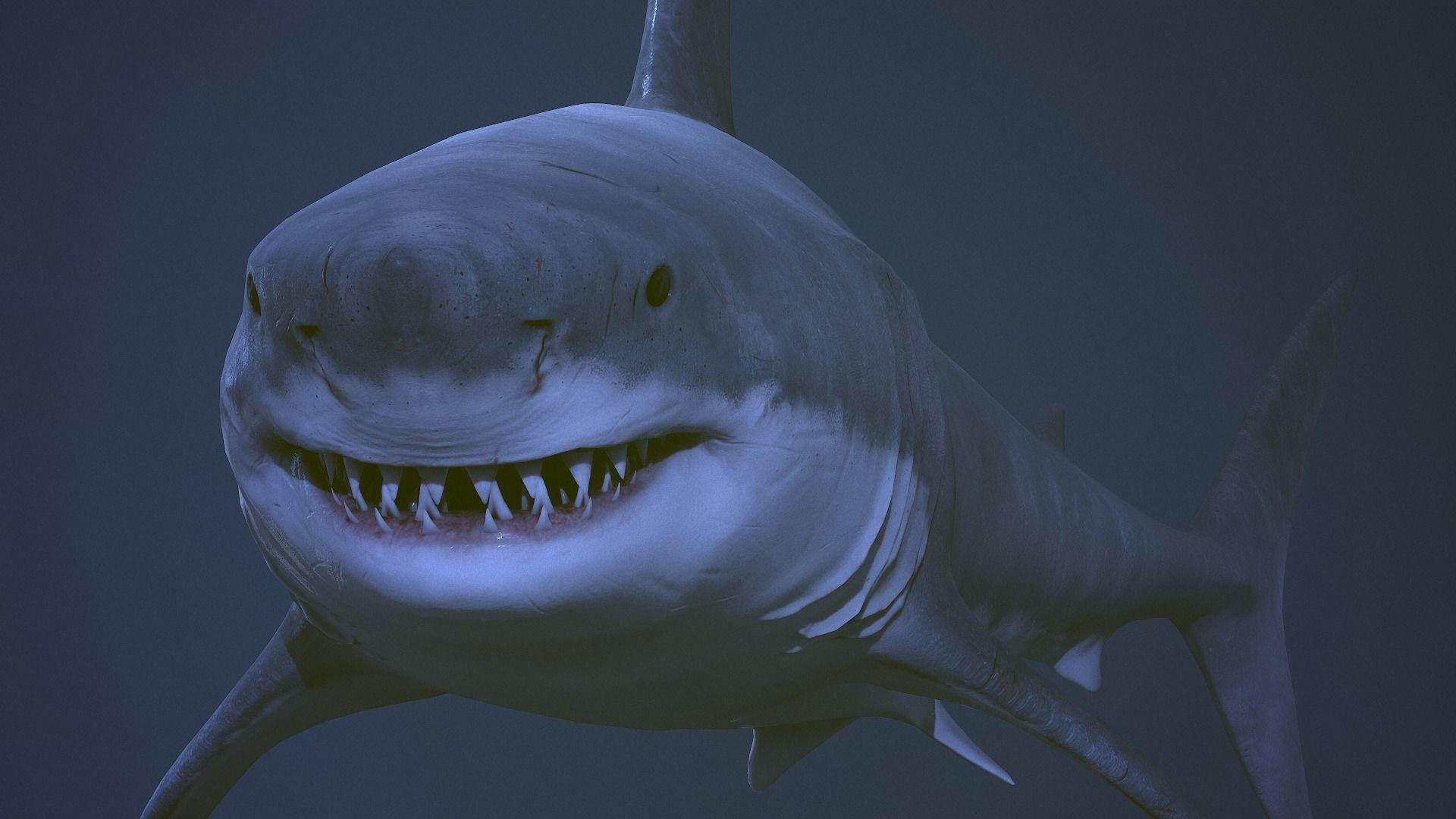 Great white shark  AAA