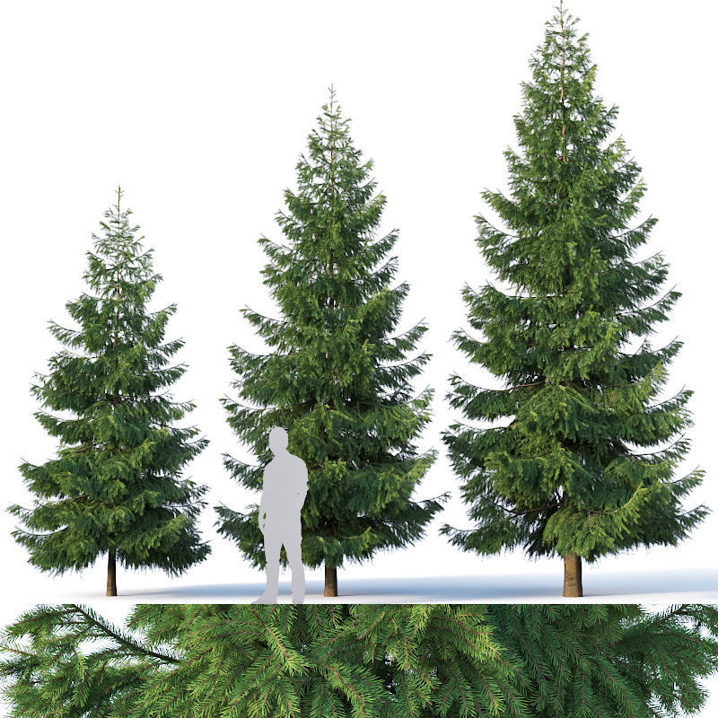 Spruce Nr 3  Three sizes H430-650cm - Modular branches