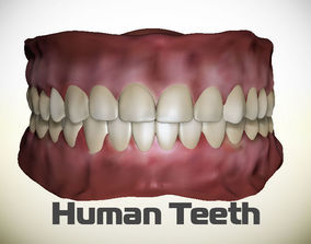 3D model Teeth - Mouth for character