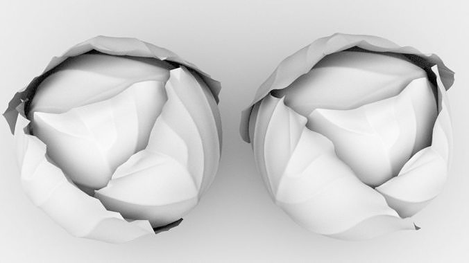 cabbage 3d model fbx 1