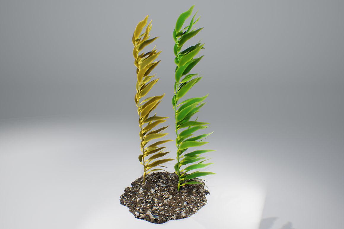Kelp  V1