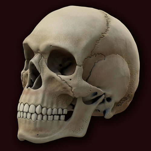 ancient skull 3d model obj mtl fbx c4d 1