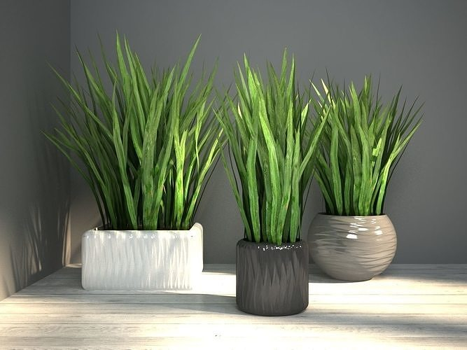 grass in pot 3d model max obj mtl 3ds fbx 1