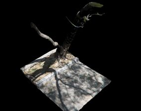 forest Big Tree 3D