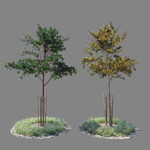 young tree 01 3d model max obj mtl 1