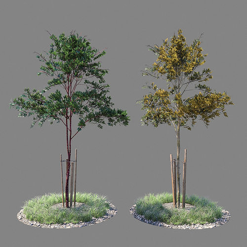 young tree 03  3d model max obj mtl 1