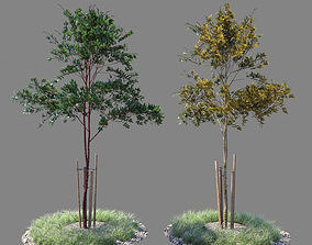 3D model Young tree 03