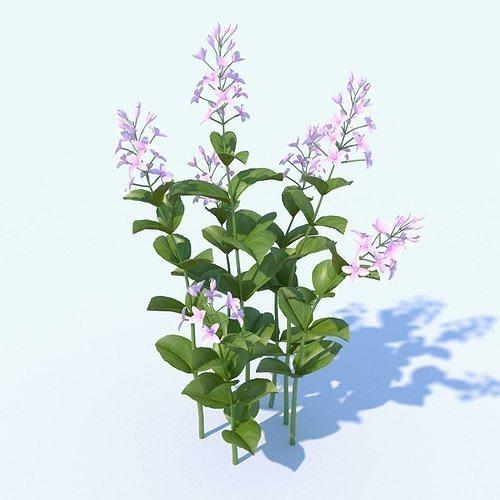 golden eranthemum plant 3d model max obj mtl fbx 1