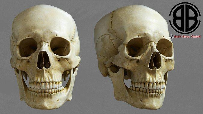 skull 3d model max obj 3ds fbx lwo lw lws ma mb 1