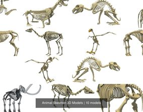 camel Animal Skeleton 3D Models