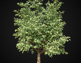 3D Maple tree 2
