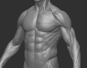 Anatomy 2in1 Ecorche and Skin 3D printable model