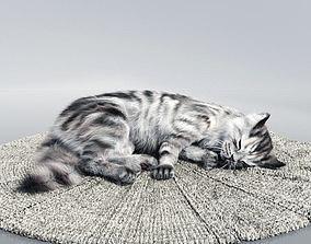 3D Cute Sleeping Cat